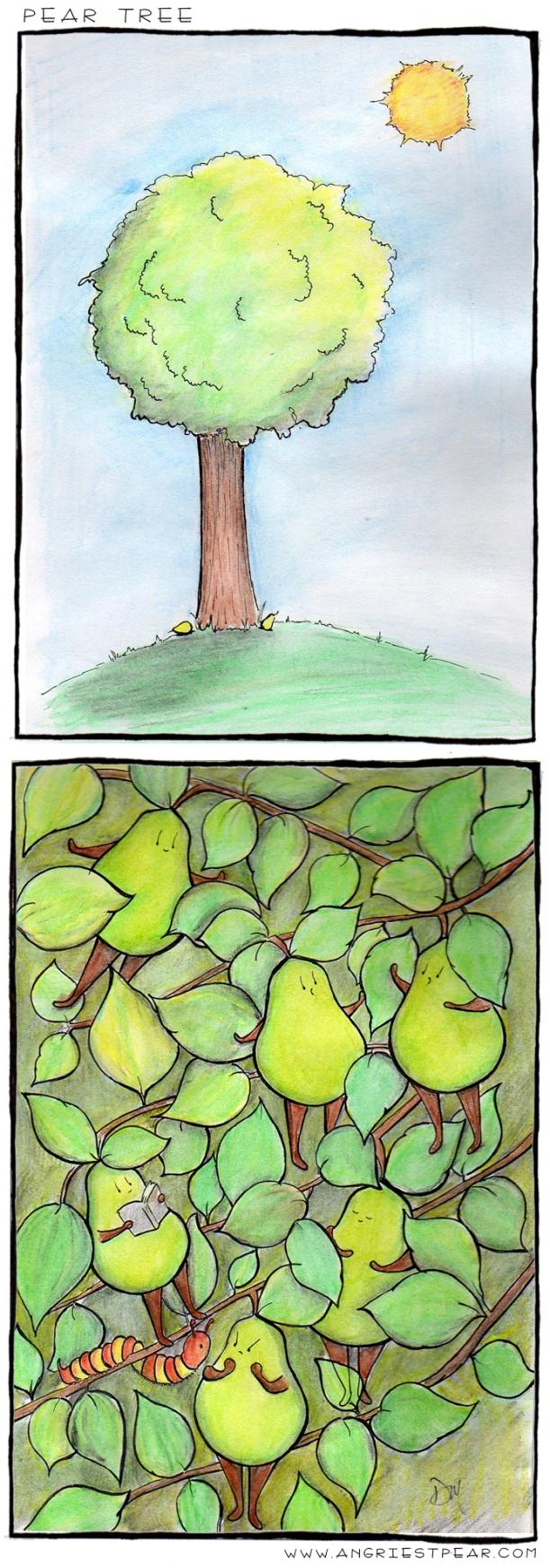 pear tree full