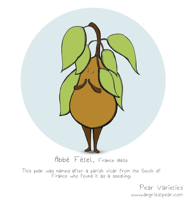 Abbe Fetel pear 1